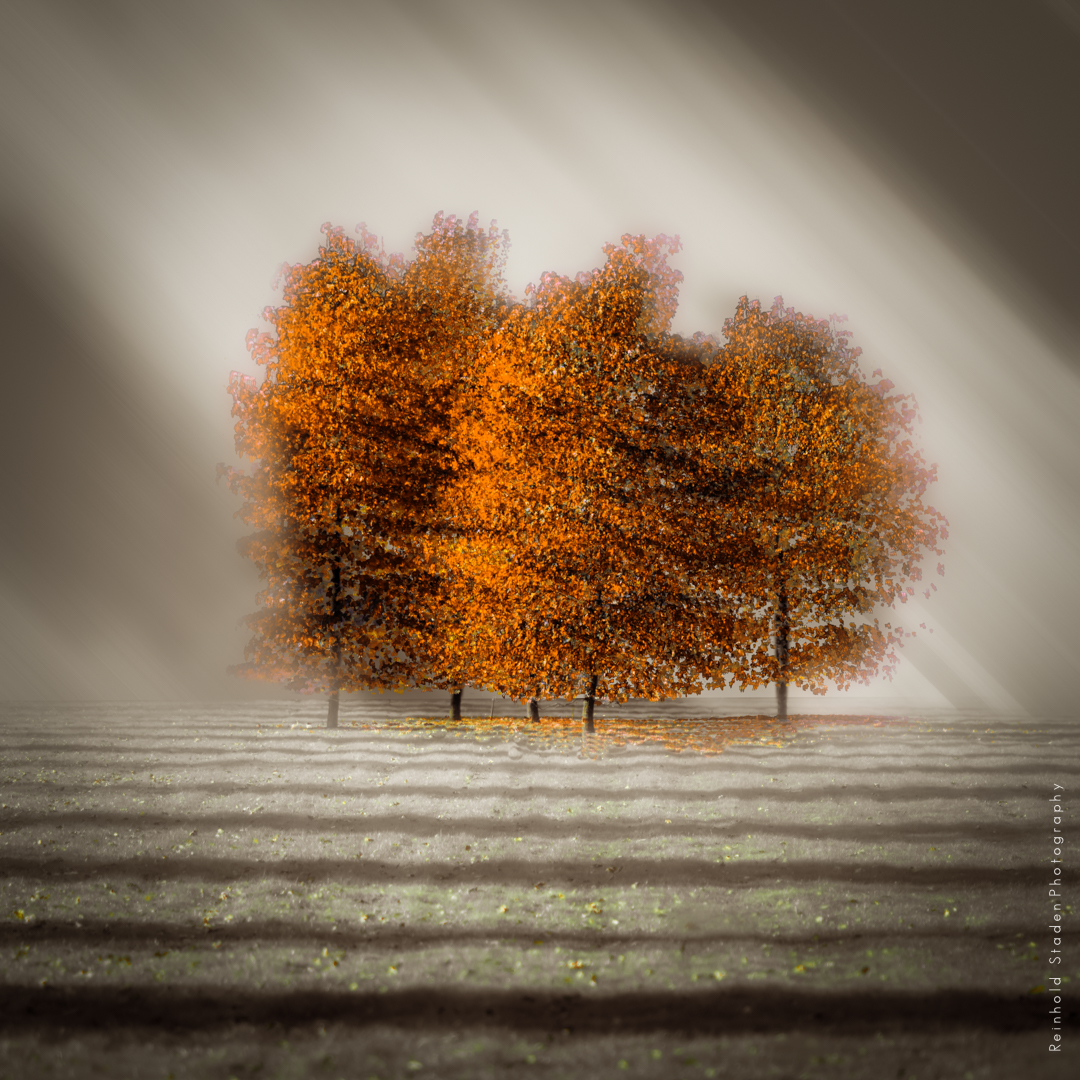 RSP - Reinhold Staden Photography - Bronze Trees