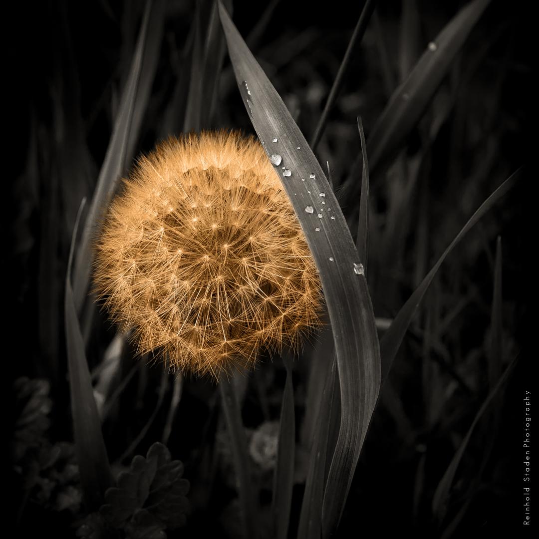 RSP - Reinhold Staden Photography - Orbit